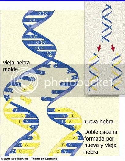 REPLICACION Y TRANSCRIPCION DEL ADN (1/5)