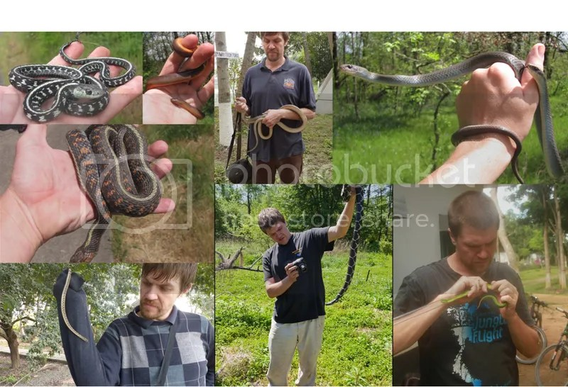Herping photos with snakes in hand