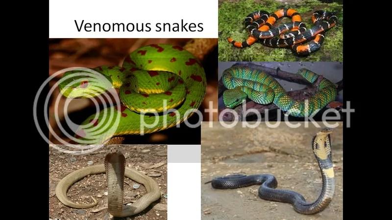 venomous snakes of manila