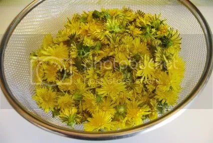 dandelions picked