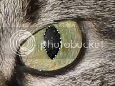 oog klaar