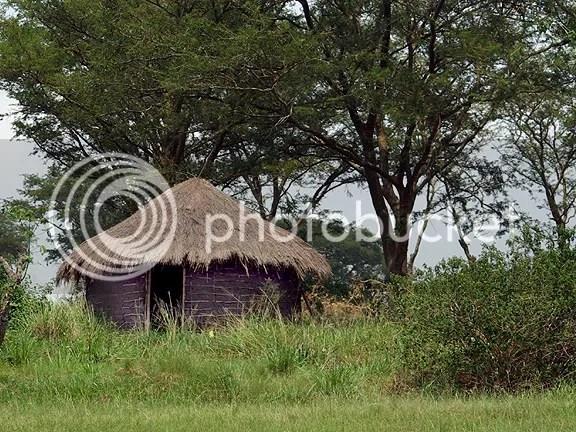 abandoned hut in Ishasha