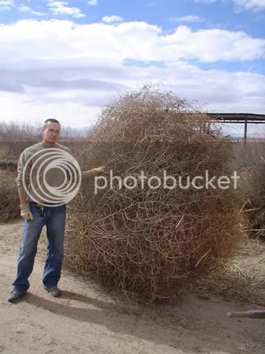 BIG tumbleweed