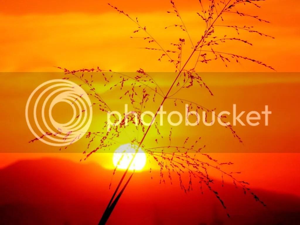 https://i1.wp.com/i244.photobucket.com/albums/gg37/rayralu/sunshine.jpg