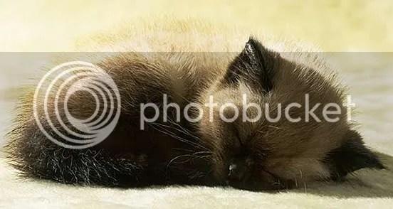 cute animal photo: Cute Animal 14.jpg