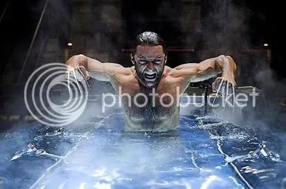 Wolverine depois de tomar um calmante. Foto de James Fisher - CLIQUE AQUI PARA AMPLIAR ESTA FOTO EM BOA RESOLUÇÃO