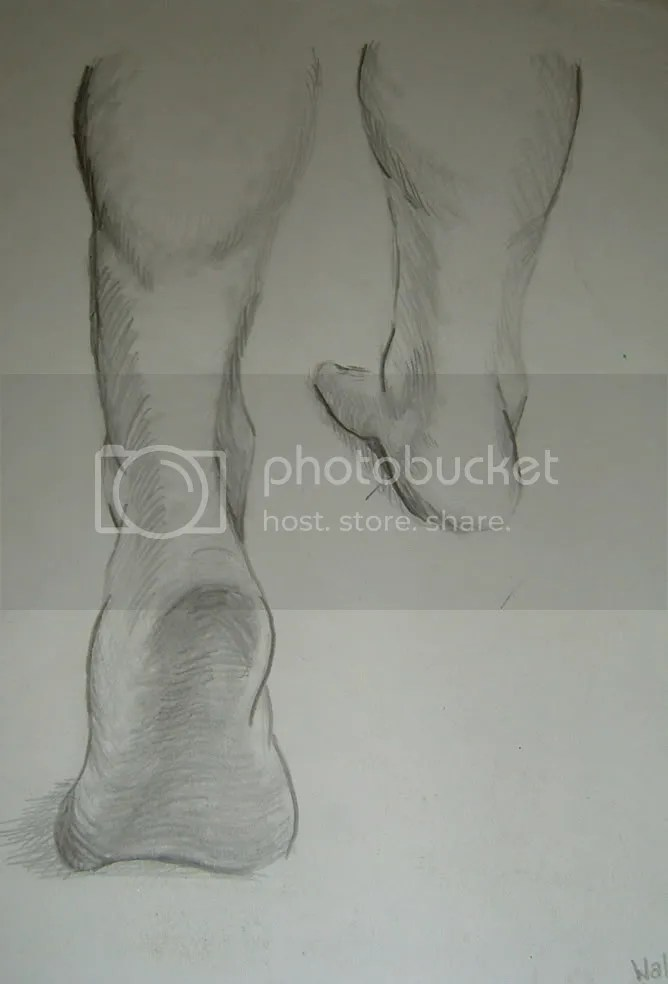 walking feet