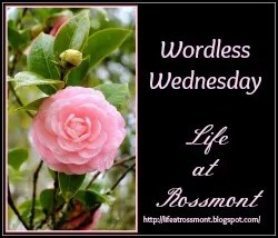 Wordless Wednesday at Life at Rossmont