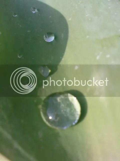 Drop of water yin yang zensense crafts