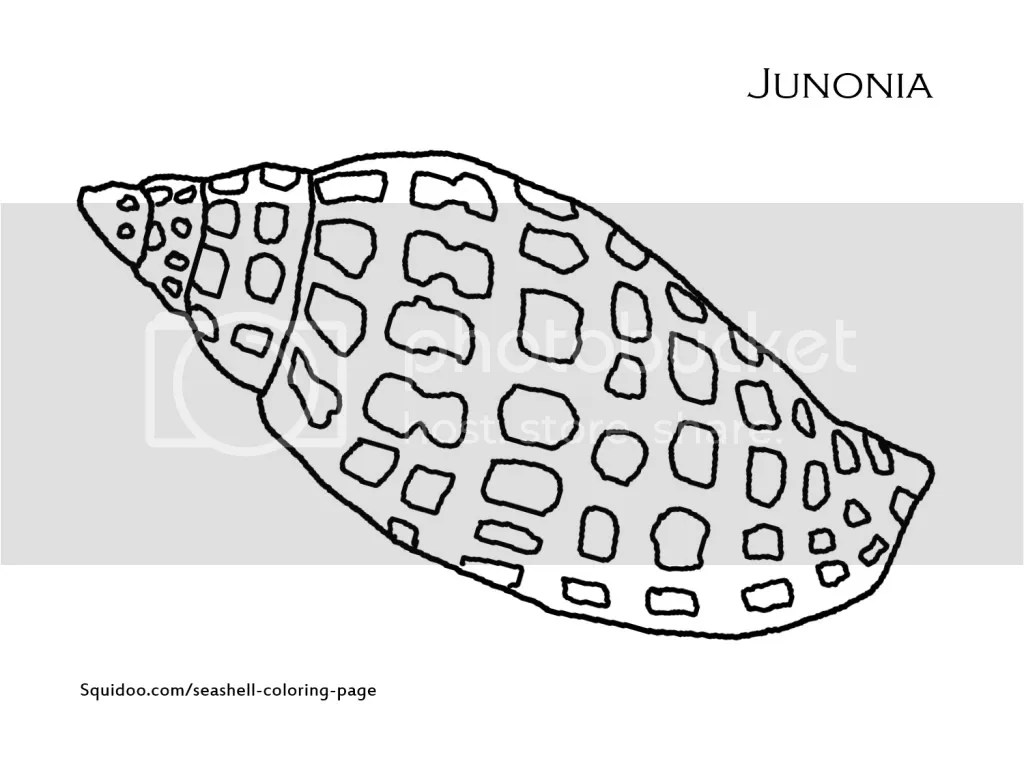 Coloring Page Printout Junonia Seashells By Millhill