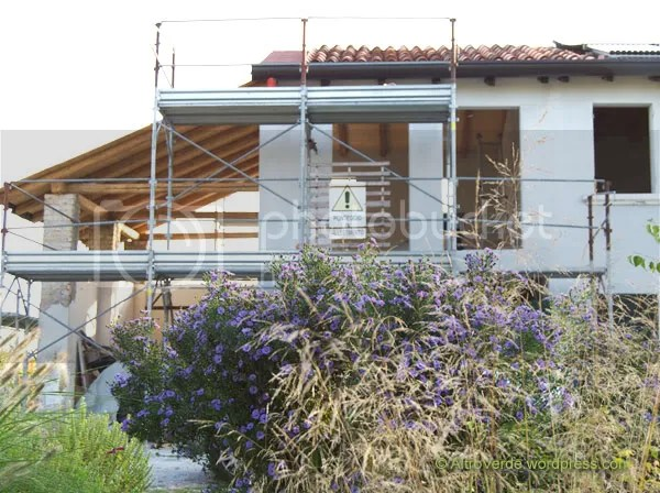 Soon we'll paint the house walls red again. The aster foreground is a 'Blau Danube' .