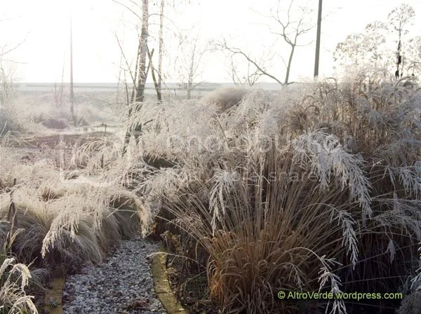 Everything was bright white or sepia tone, here is Molinia 'Transparent' centre stage