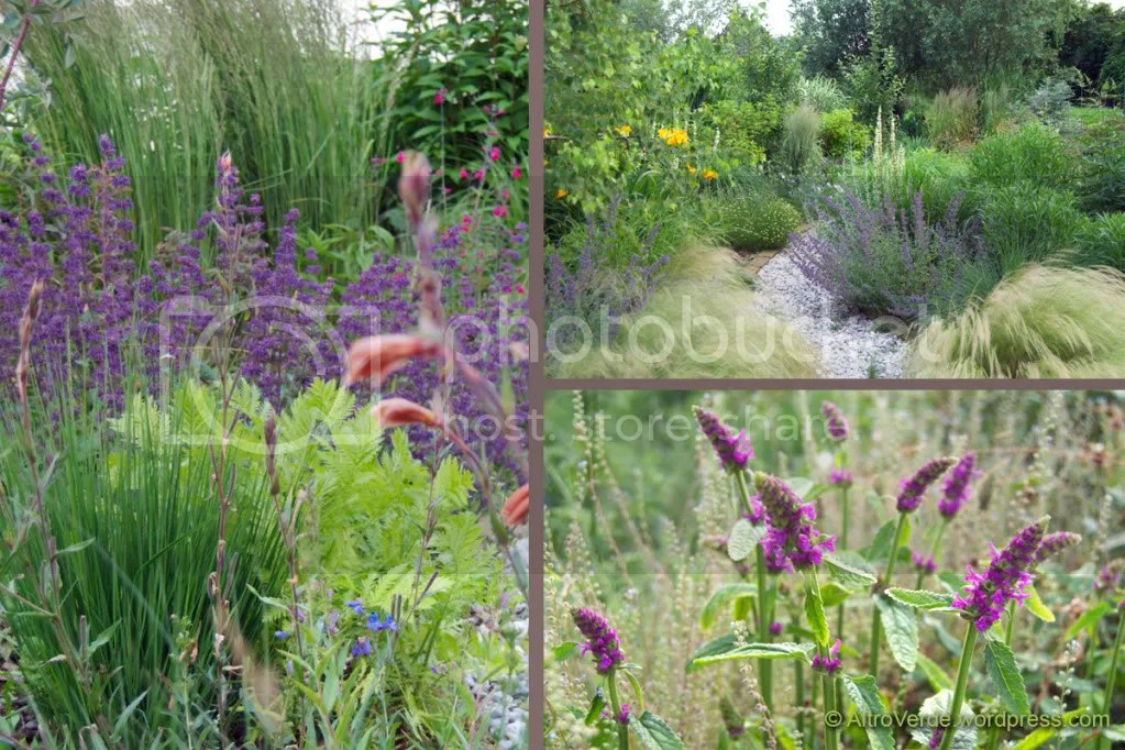 Clockwise from left: salvia verticillata 'Purple Rain' with tanacetum 'Isla Gold' and some grasses: molinia in the foreground and calamagrostis acutiflora 'Stricta' in the background -  A view of the Grass garden - Stachys 'Hummelo' with forget me not seed heads