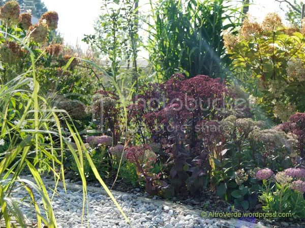 A mixture of sedums: 'Xenox' the darkest, 'Matrona' the fat maroon one and 'Indian Chief' the short one