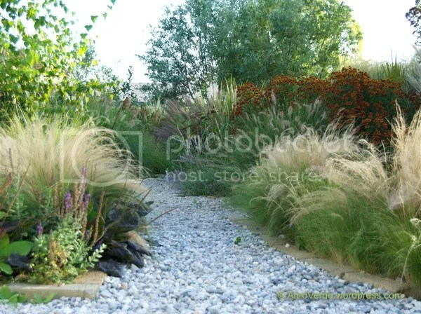 The grasses garden. Pennisetum 'Woodside' unfurls against the red helenium. Further you can see pennisetum 'Hameln' and 'Magic'