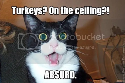 https://i1.wp.com/i254.photobucket.com/albums/hh100/ShyKittenMell/Funny_Pictures_General_Turkeys_on_t.jpg