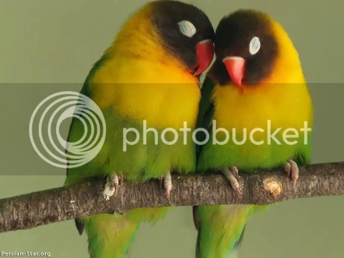 BirdSoulAndBeloved.jpg