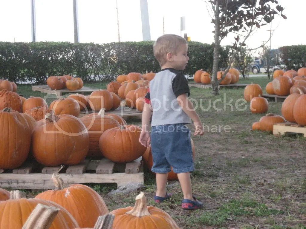 So many pumpkins to choose from