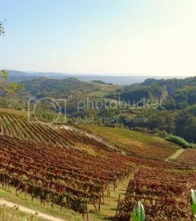 Wijnboerderij Spigno Monferrato