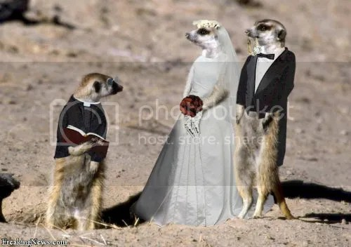 whatever photo Animal-Weddings_zpsbbfdba9e.jpg