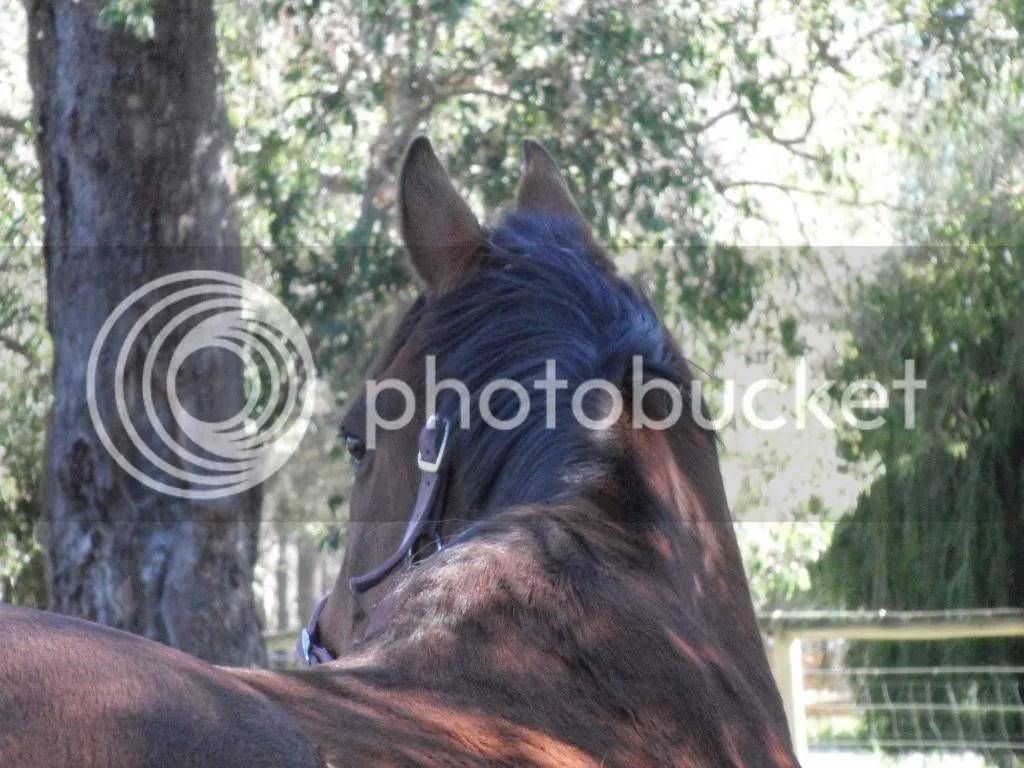 Horse Acrostic Poems