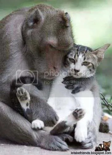 Oh gosh, monkey and cat!