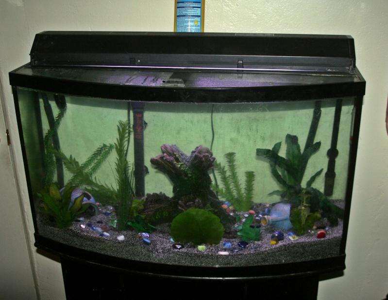 Front Bow Aquarium Corner