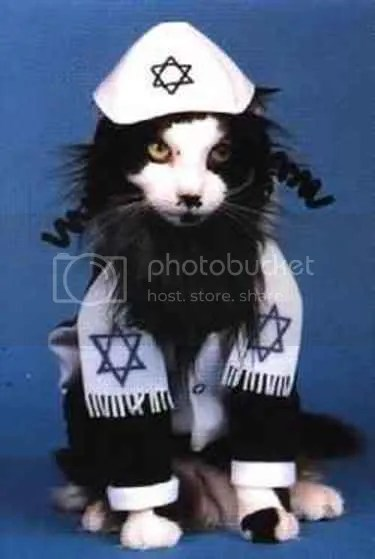 Hasidic cat