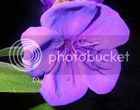 bloemendidy1.jpg picture by cherinja-album