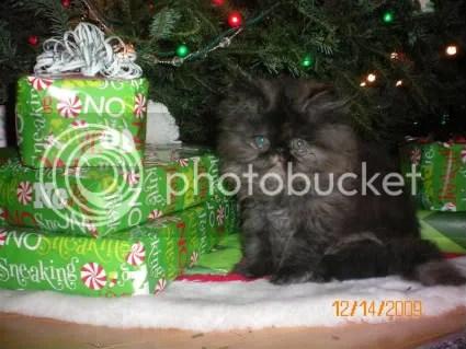 Kansas Christmas present