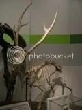 Largedeer.jpg Large deer picture by Heritageofjapan