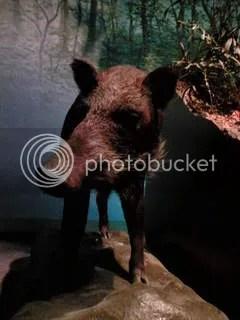 inoshishiKawasakiCityMuseum2022.jpg wild boar picture by Heritageofjapan