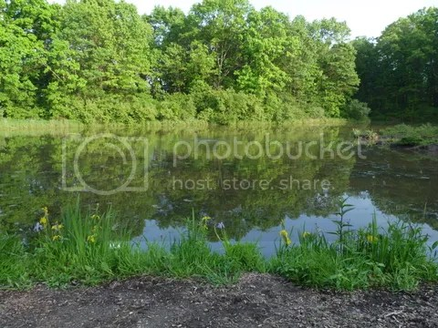 photo P1060486_zps2882103c.jpg