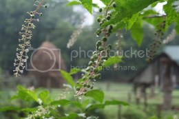 Musuem of Appalachia Gardens by Shannon Hurst Lane