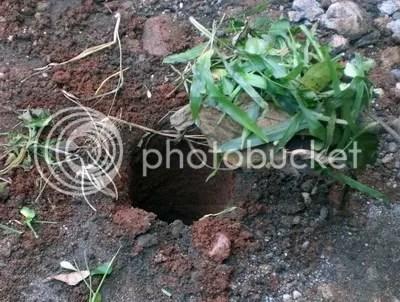 Masukan sampah organik kedalam lubang biopori.