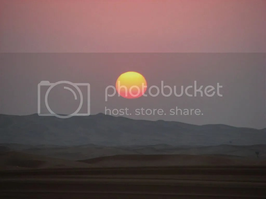 Apus in desert
