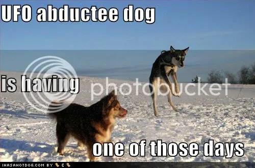 https://i1.wp.com/i272.photobucket.com/albums/jj181/Anndrayabelle/Macro/funny-dog-pictures-ufo-abductee-sno.jpg