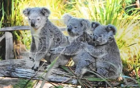 Ubuntu Karmic Koala