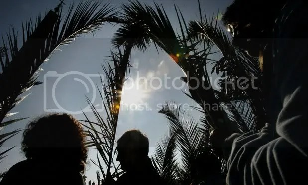 branchesduringPalm.jpg picture by kjk76_00