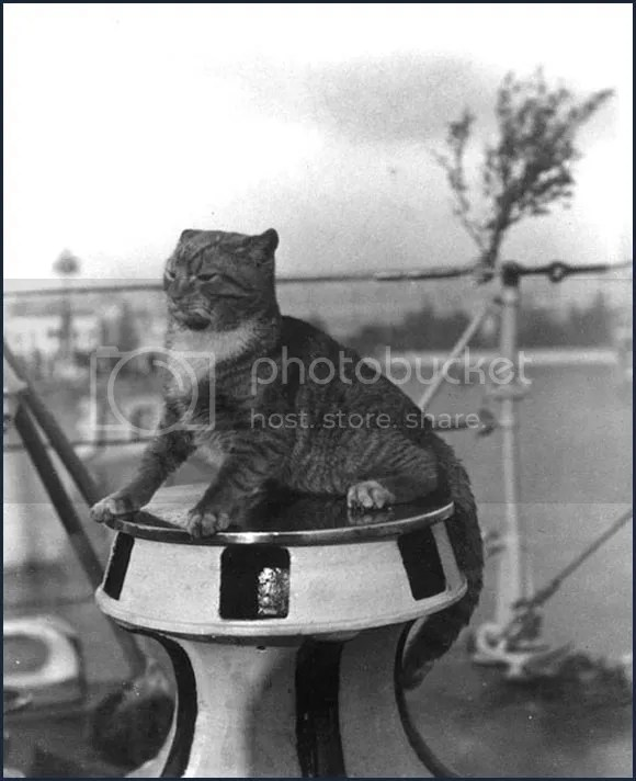 Cats in the Sea Services by U.S. Naval Institute