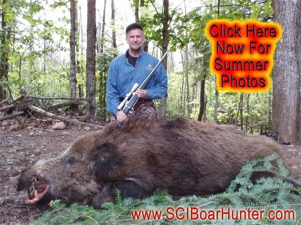 Summer Russian Boar Hunt