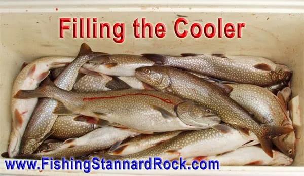 FilllingtheCooler Stannard Rock Lake Trout   Filling the Cooler