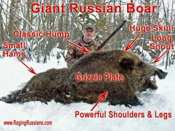 Authentic Russian Boar