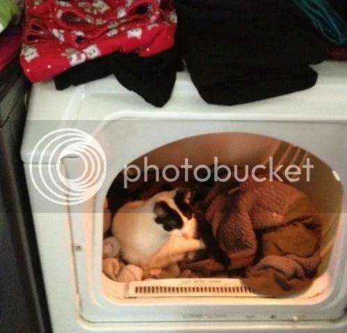 Nara in dryer