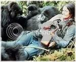 dian fossey, gorilla in the mist, berkuasa atas hewan