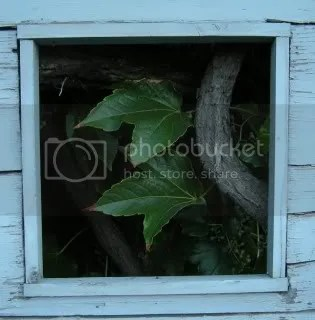 Türfenster