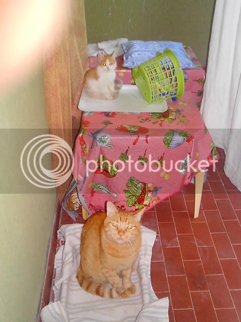 ruby and minnalouche
