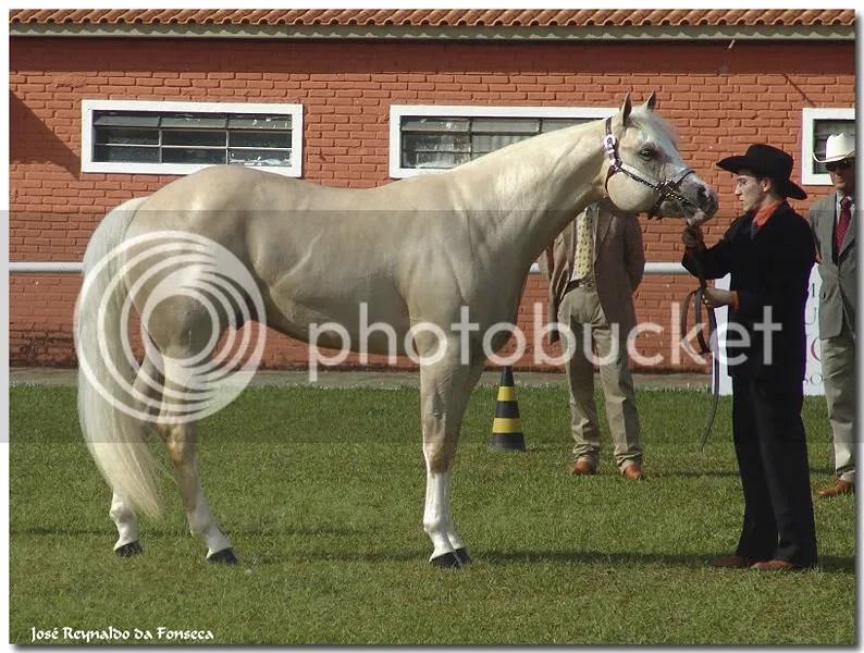 Jackson's horse