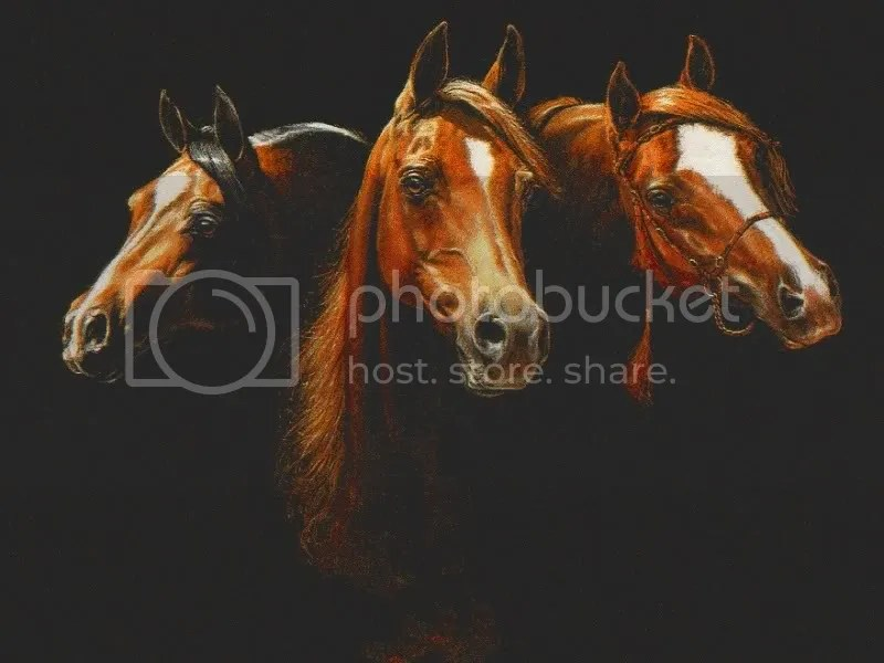 Three Horses Pictures, Images and Photos