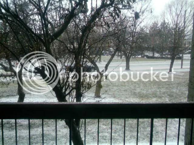 Snow Dusting 01